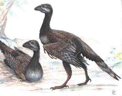 aves prehistoricas de argentina Enantiornis