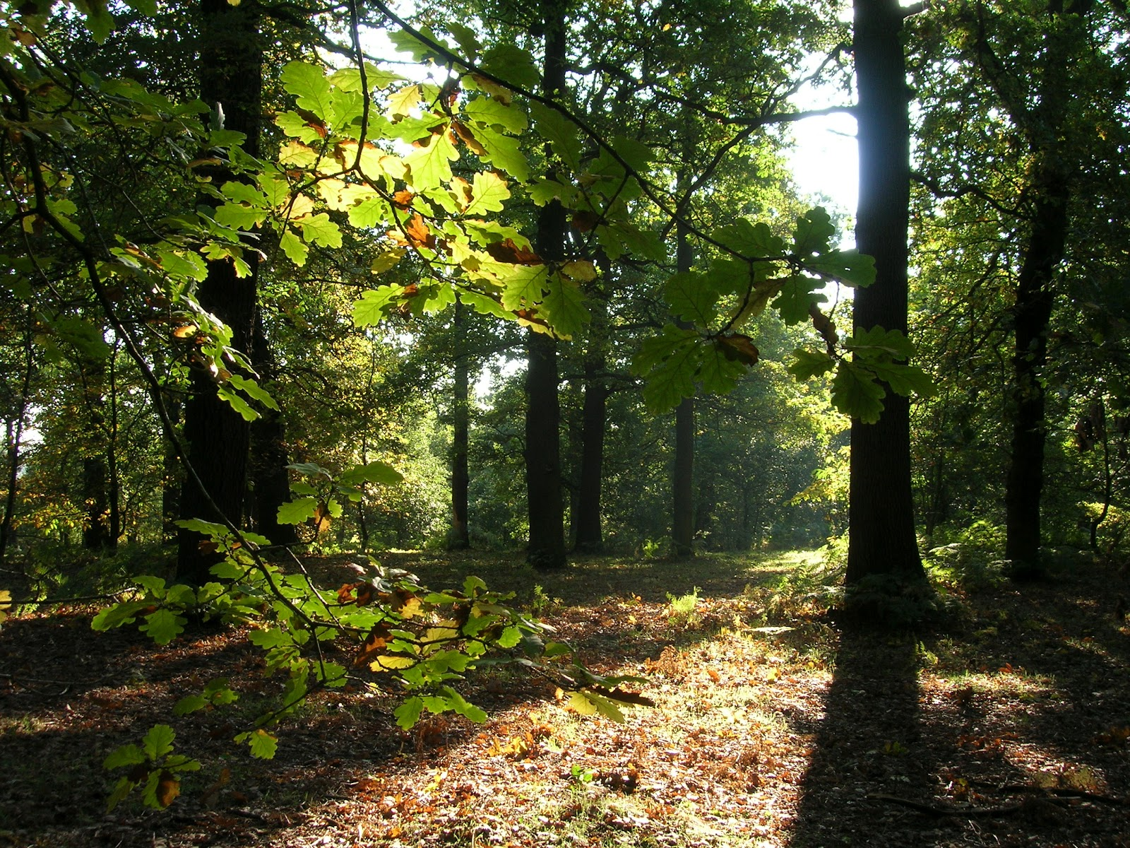 Archaeology And History Of Medieval Sherwood Forest Guest Blog Entry Promoting Sherwood Forest