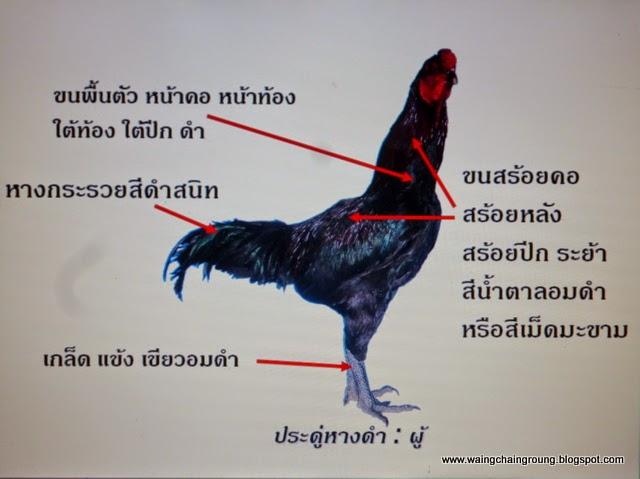ไก่ประดู่เพศผู้
