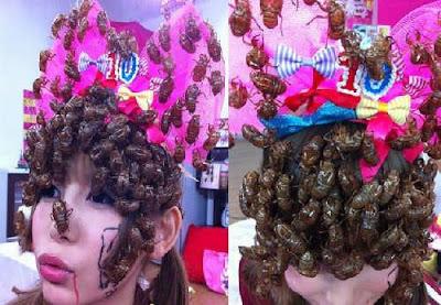 Hobi Koleksi Kecoa di Kepala