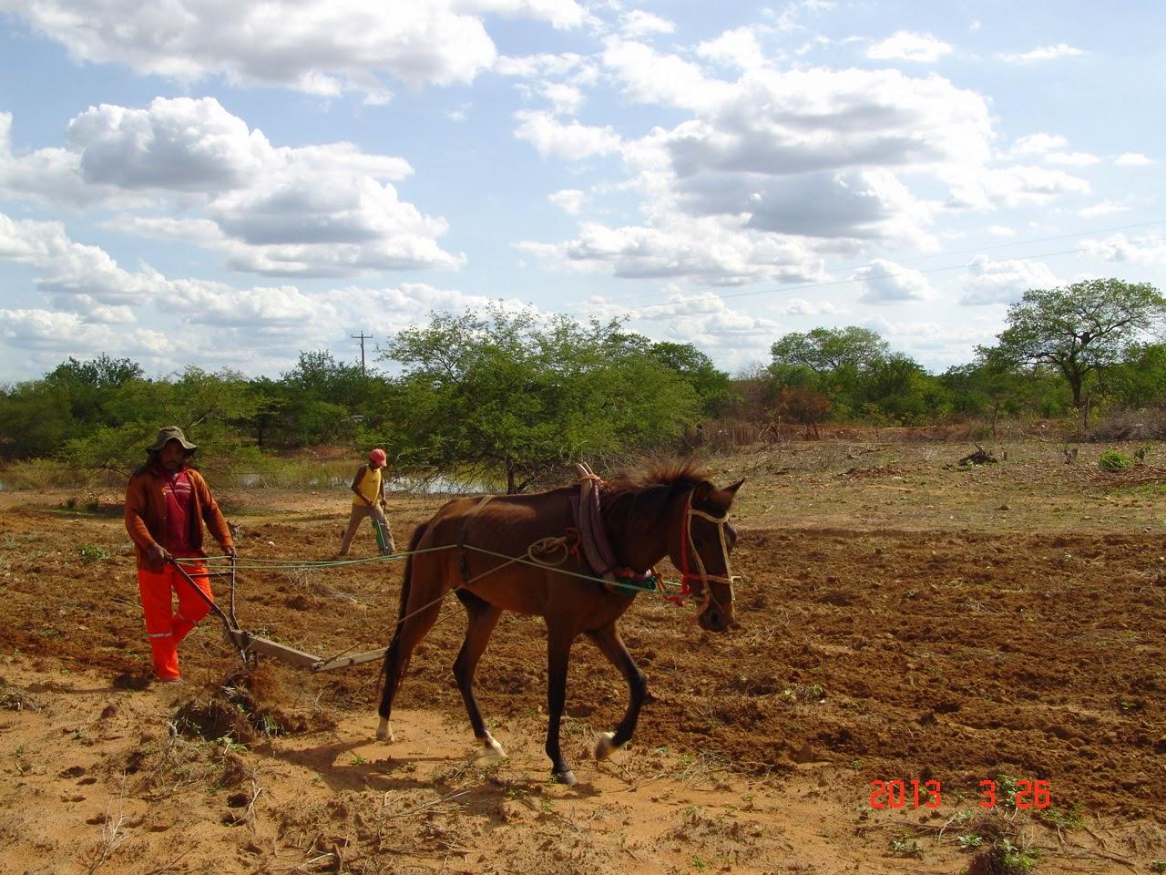 Agricultor utilizando tração animal