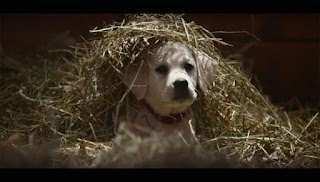 The Most Shared Super Bowl Ad of Last Year Stars a Puppy