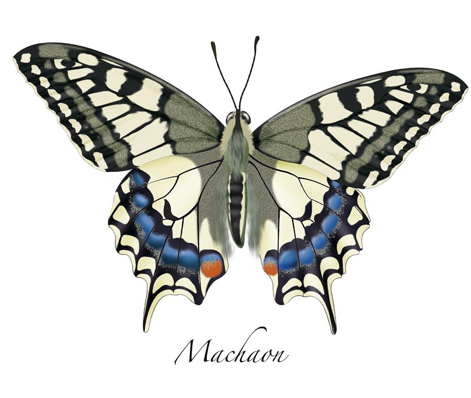 Pin coloriage petit papillon en ligne gratuit a imprimer - Dessin petit papillon ...