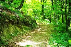 Bosque de Moal, en los confines de Muniellos