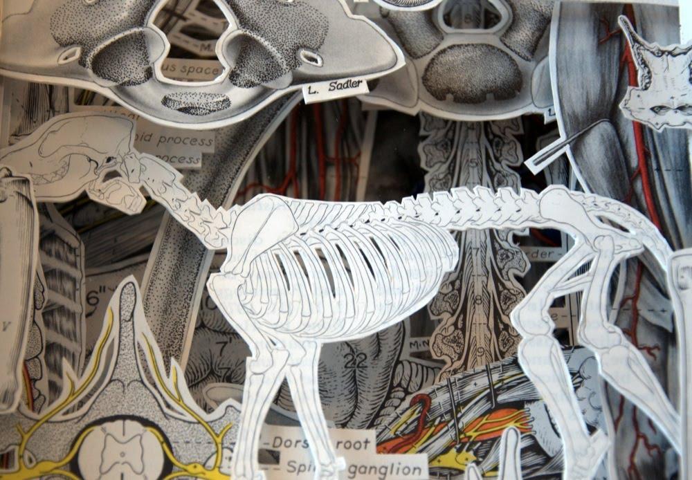 Miller\'s Anatomy of the Dog   Hokey Stokes!