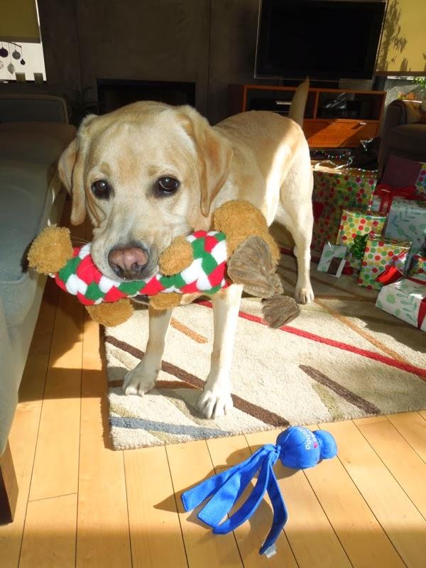 Labrador Cooper Christmas toys