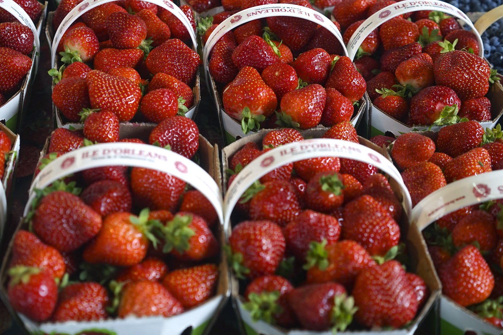 jean talon market strawberries