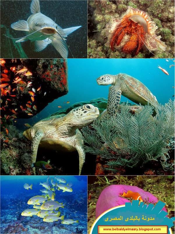 حمل وشاهد اجمل 30 خلفيه لاسماك وحيوانات اعماق البحار   30 deep sea animal corel aqua hd  wallpapers
