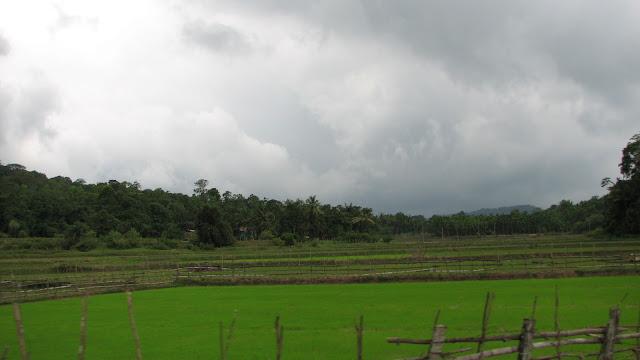 Greenery of Western Ghats