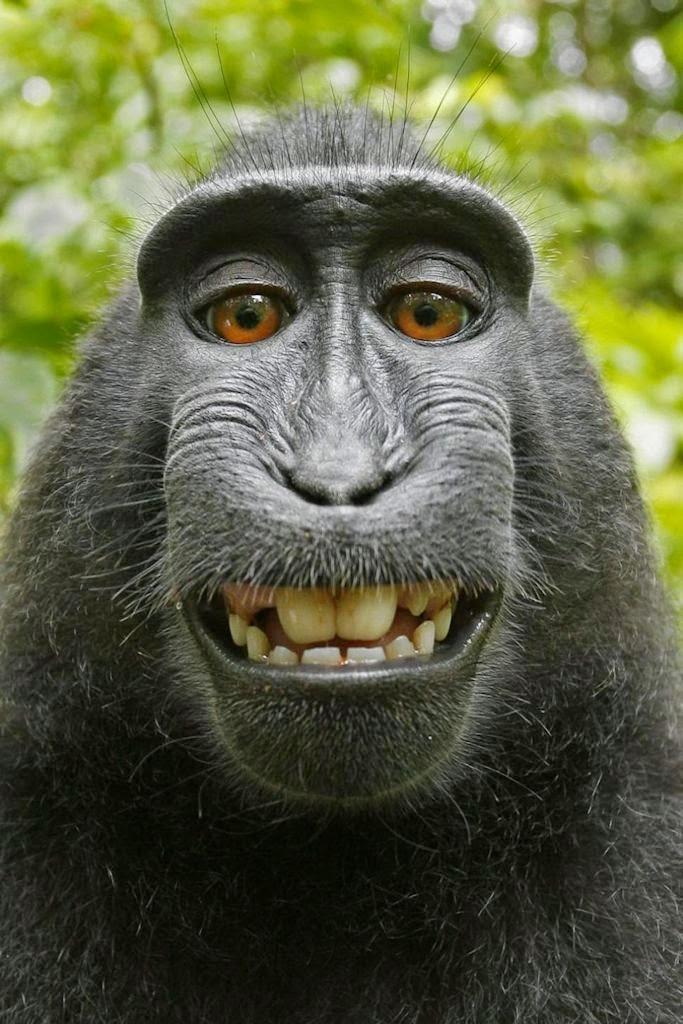 Copyright Office: animal não é sujeito de direitos
