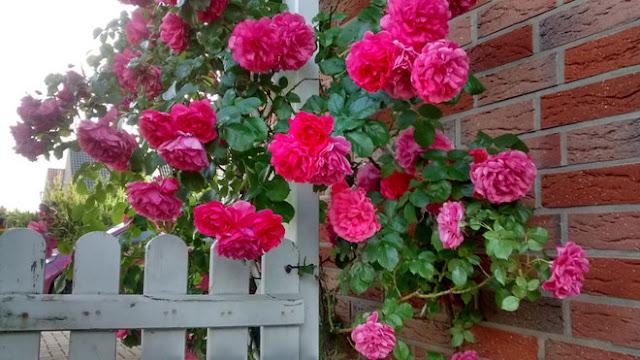 cổng vườn đẹp