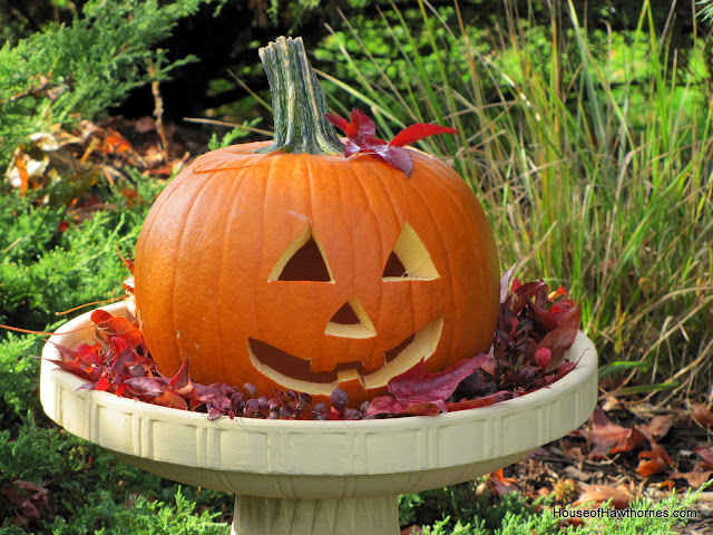 Pumpkin in a birdbath