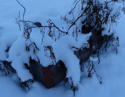 Gartenrundgang Januar - Hochbeet