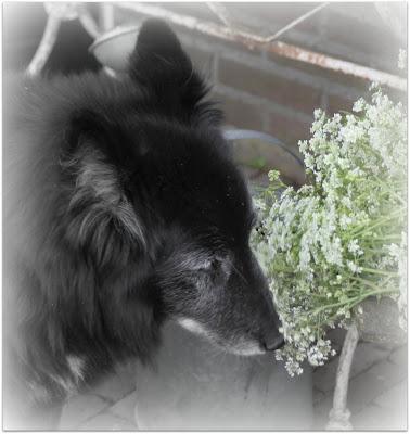 onze lieve honden
