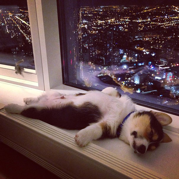 15 cães que adormecem... em qualquer lugar