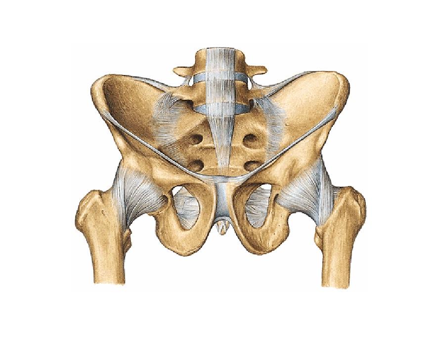 Fisioterapia: Articulación Coxofemoral