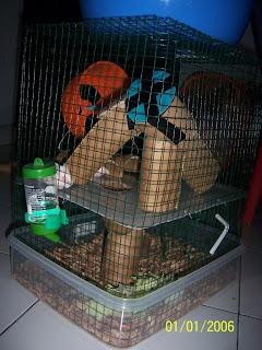 Membuat Kandang Hamster