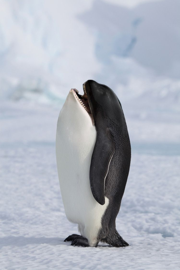 Killer Penguin