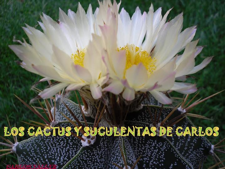 LOS CACTUS Y SUCULENTAS DE CARLOS