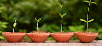 hormon tumbuhan