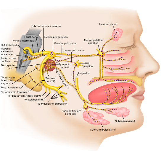 how to stop facial nerve pain