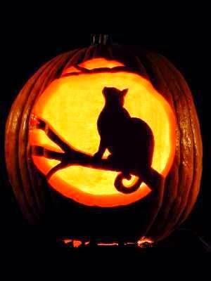 cat pumpkin