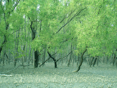 Sundarbans Mangrove Forest Bangladesh India