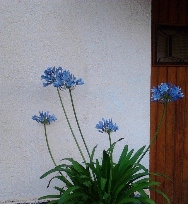 Del jardín de la Balandra