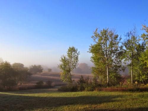 backyard in fog