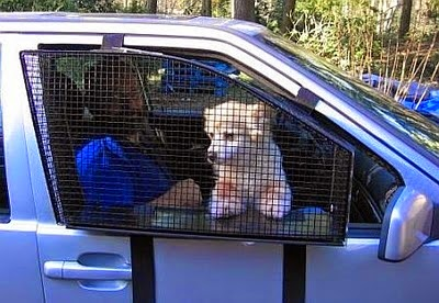 dog car screen
