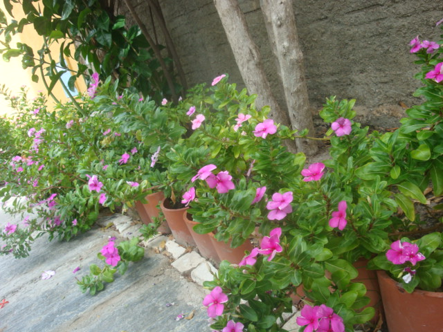 se encheram de flores, deixando a frente de casa muito mais alegre