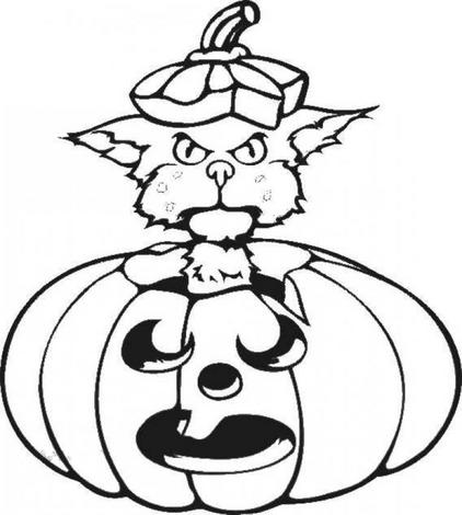 pumpkin cat source
