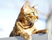 campione gratuito cibo gatti