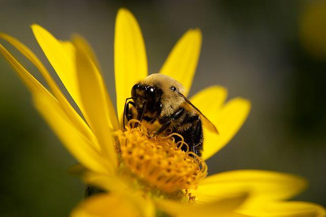 [Imagem: bee_flower.jpg]