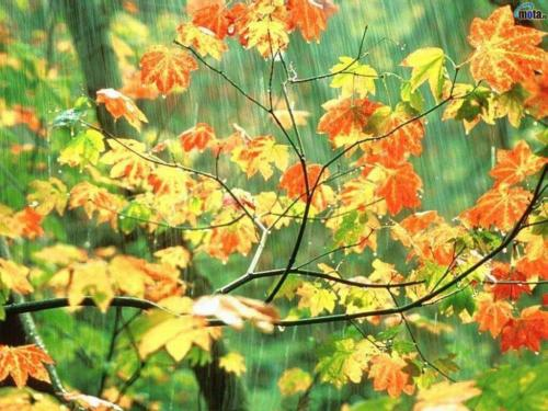 Raining Beautiful Backgrounds