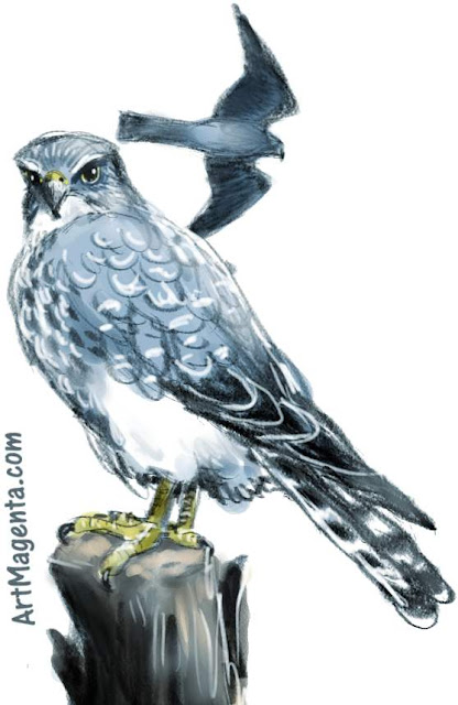 Merlin sketch painting. Bird art drawing by illustrator Artmagenta.