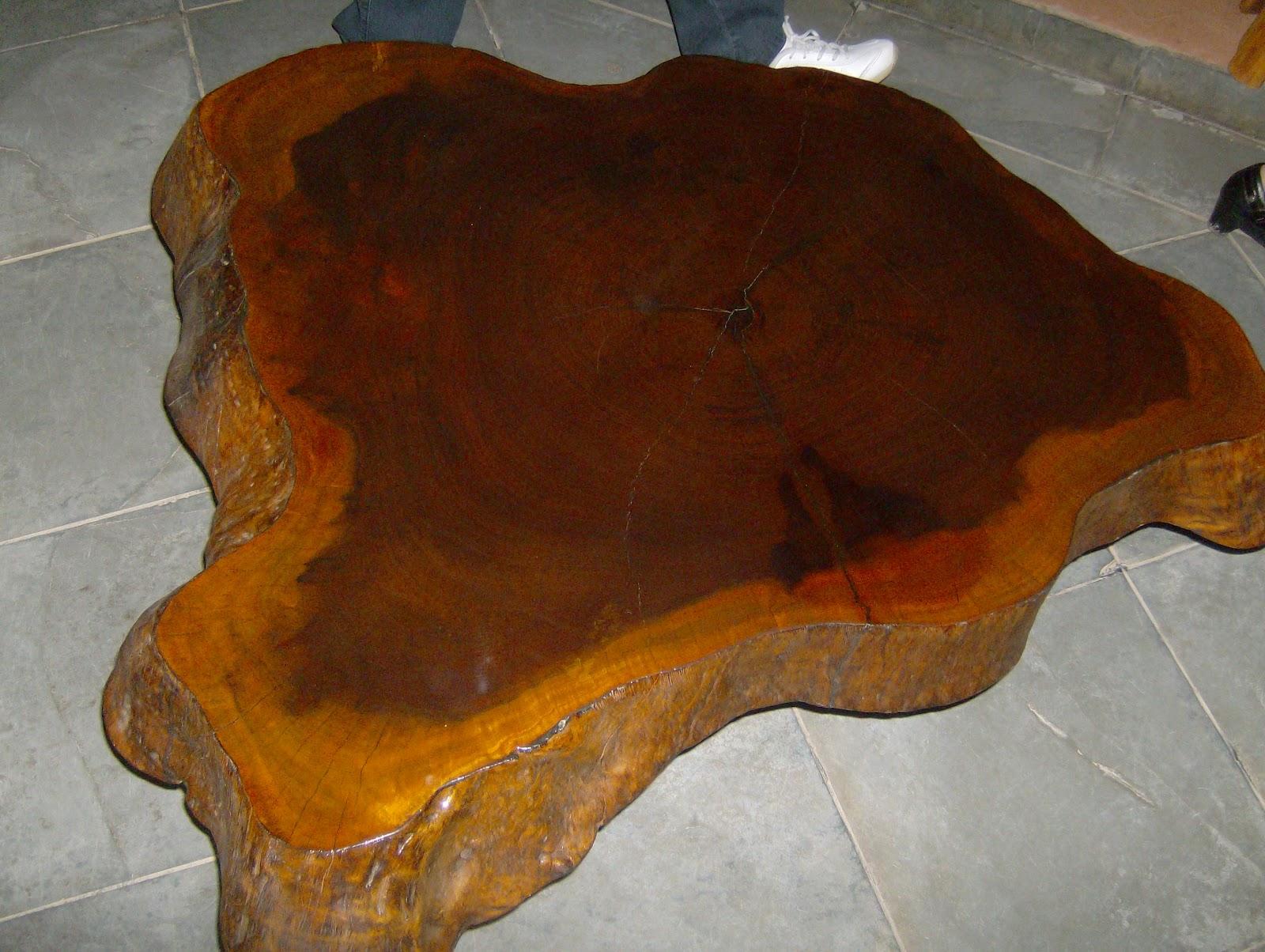 Este móvel de árvore nos lembra o mapa do Brasil. Não é lindo!!! #BA7110 1600x1204