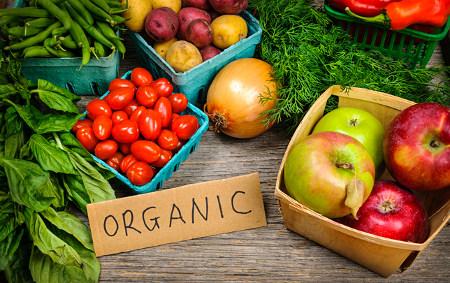 Contoh bahan-bahan organik