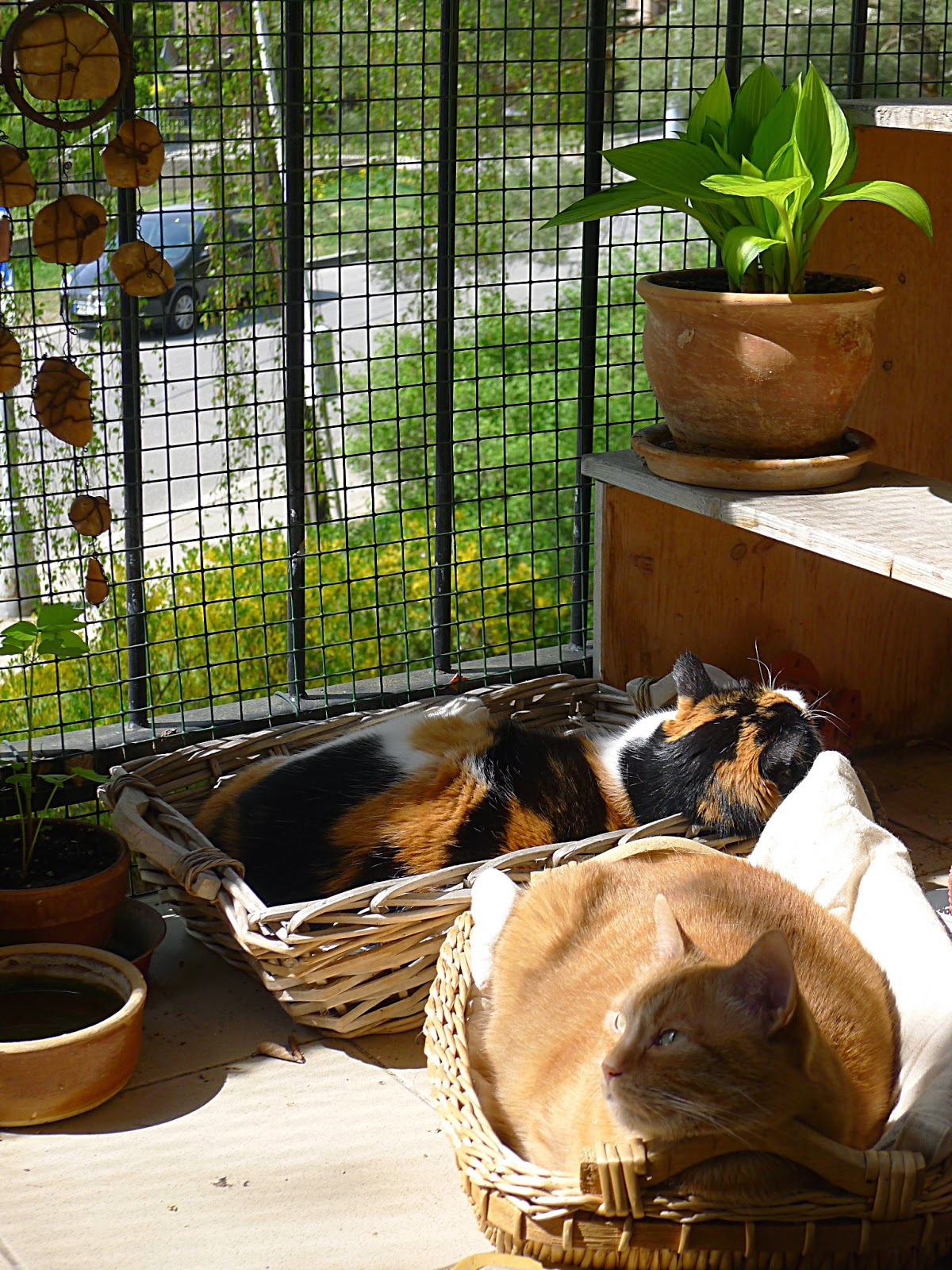 Apartment balcony safety: gardenless gardener: cat balcony ...