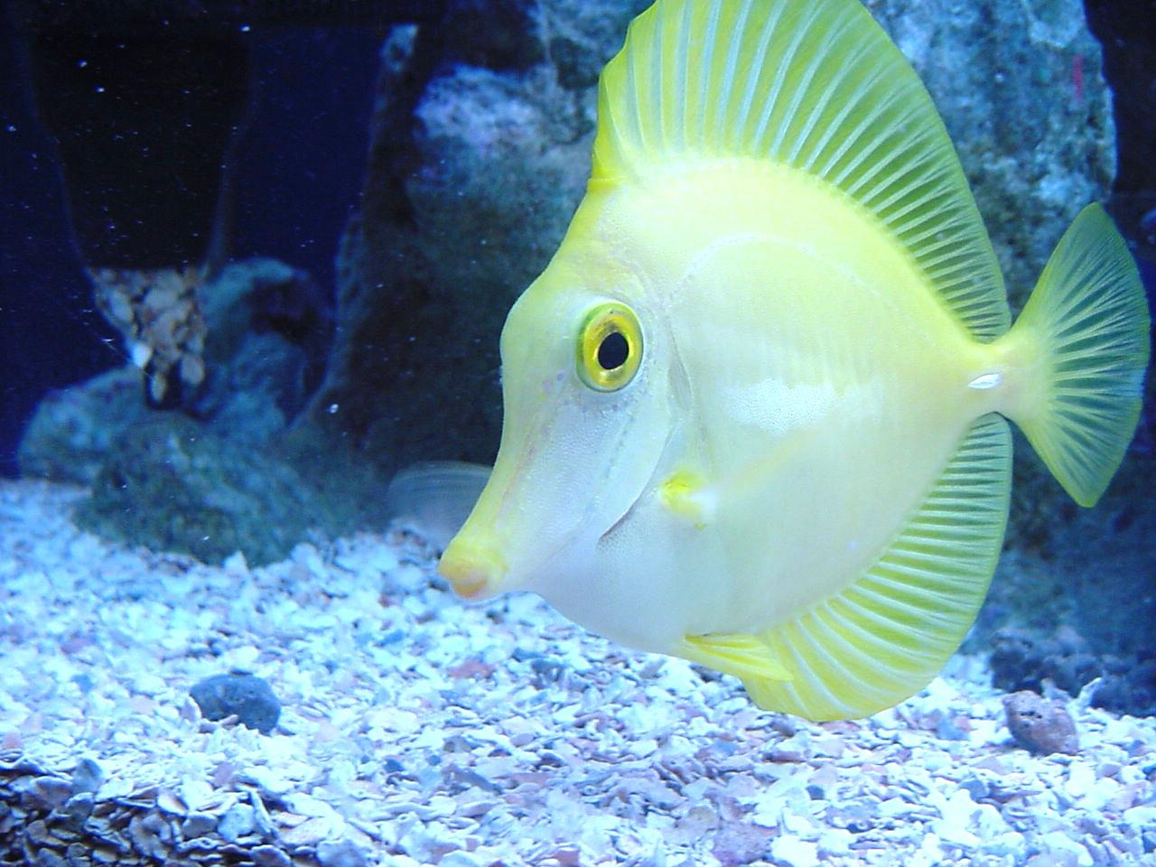 Wallpaper Ikan Hias Cantik Belajar Blog
