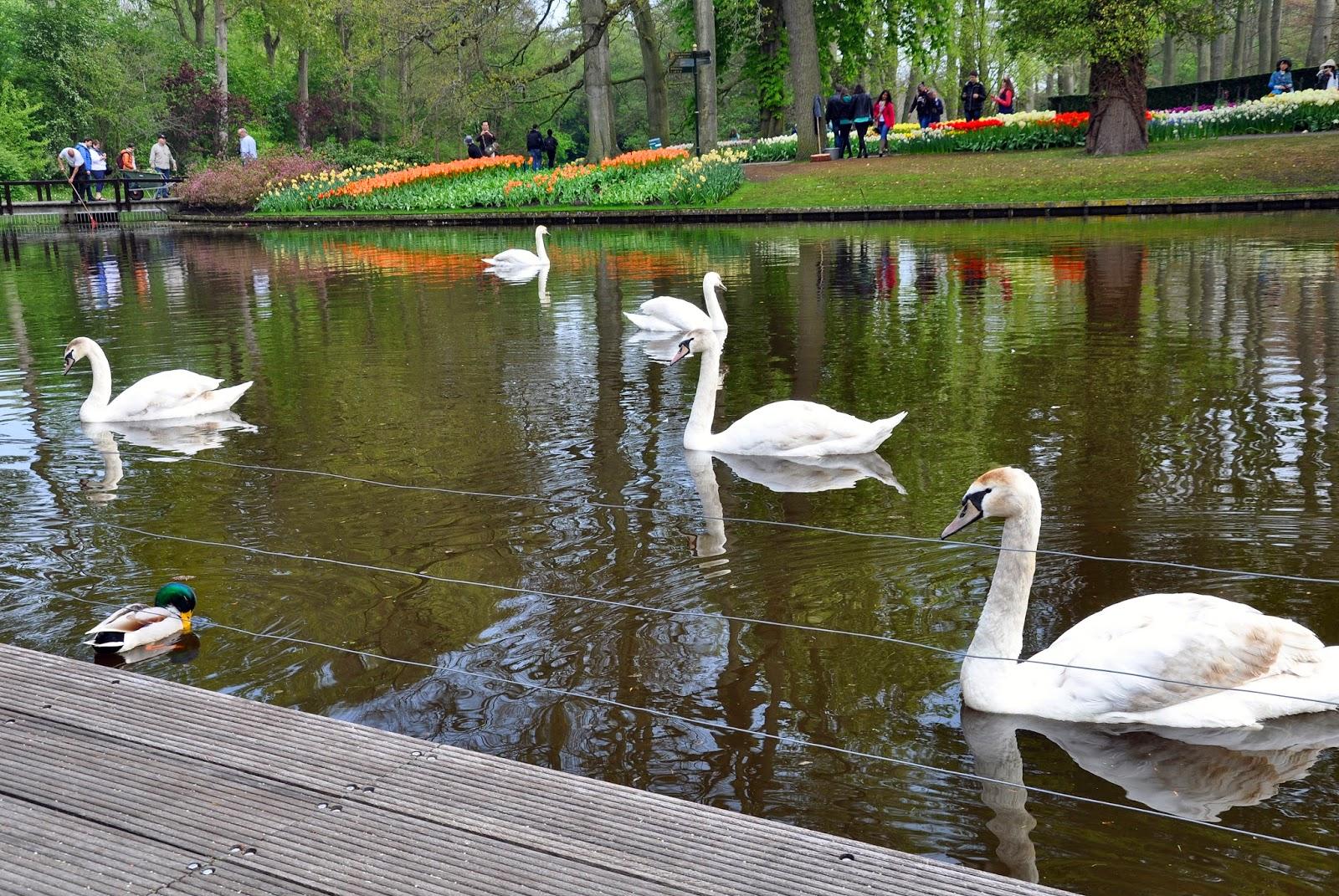 лебеди парк цветов