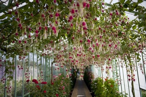 "<img src=""royal-greenhouses1.jpg"" alt=""royal green house"">"