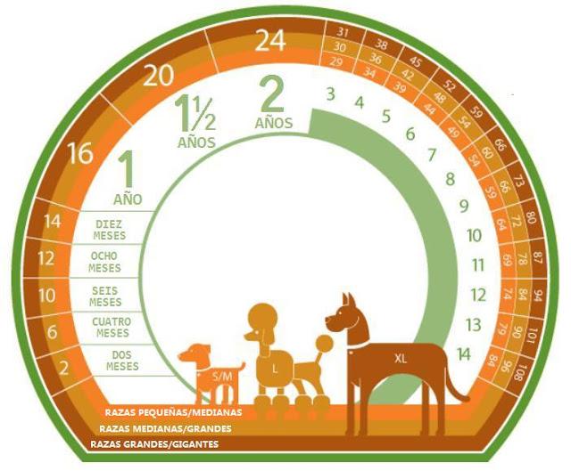 Tabla Equivalencia de Años de Perros a Humanos