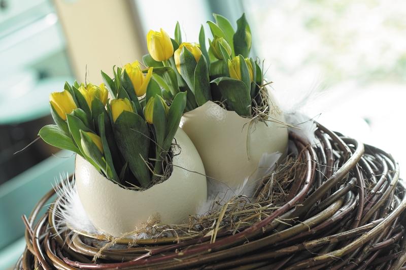 dekoracja_wielkanocna_tulipany_wyrastaja
