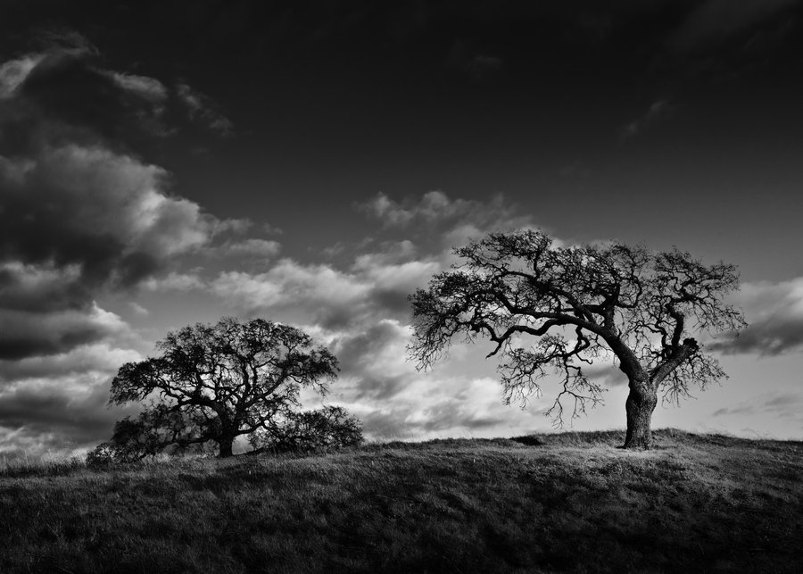 Kumpulan Lirik Lagu: The Hanging Tree Lyrics - Jennifer Lawrence