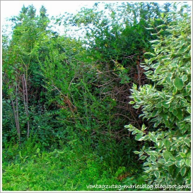 http://vontagzutag-mariesblog.blogspot.co.at/2013/09/herbstzeit-ist-pflanzen-schnittzeit.html