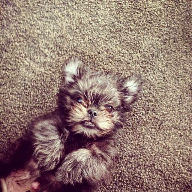Cute dogs - part 32 (50 pics), dog pictures, adorable dogs