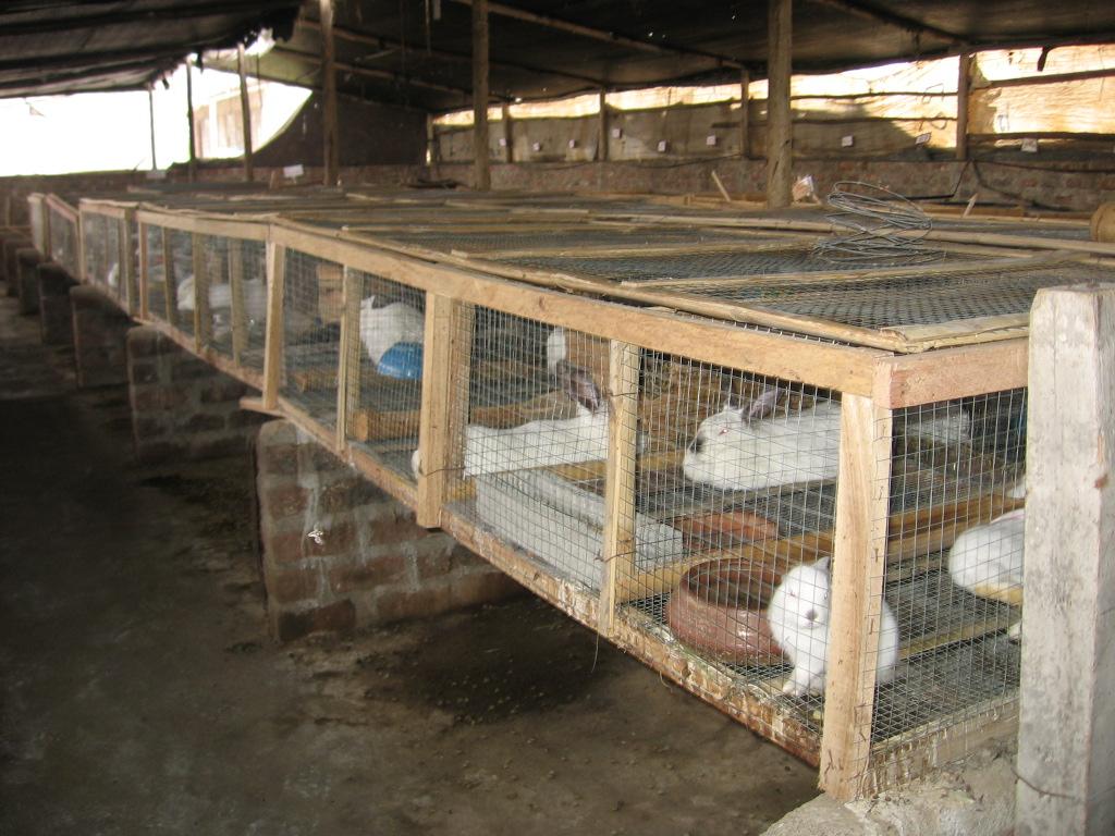 Jaulas caseras   Cunicultura desde el Perú