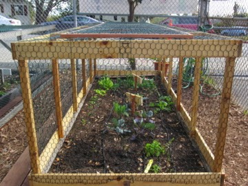 The marquez school garden blog boy scouts make a raised Raised garden bed covers