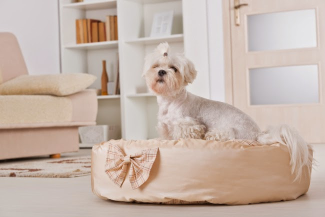 Jak nauczyć psa spania w legowisku?